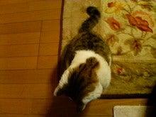 猫に仁義 怪獣に小判-090122_2227~01.jpg