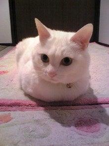 クゼリのブログ-Image945.jpg