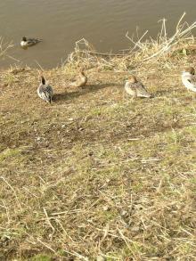 川原にいた鳥