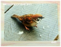 MICCOKICCO&MOKOさんポストカード