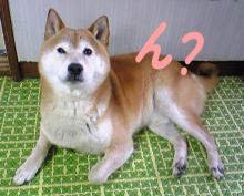 小次郎はこっち