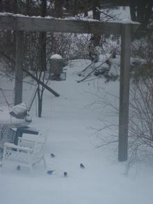 アメリカ~NYの田舎生活-bird feeder2