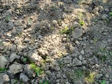 EMぼかしで土はふかふか