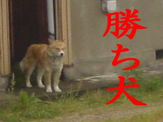 ポチ子=勝ち犬