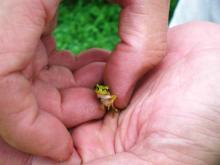 キャー((+o+)) こんな小さくても蛙は蛙!(汗;)