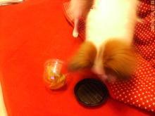 20070125猫4