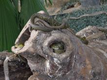 旅順・蛇博物館5