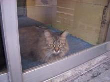 クリーニング店猫-2