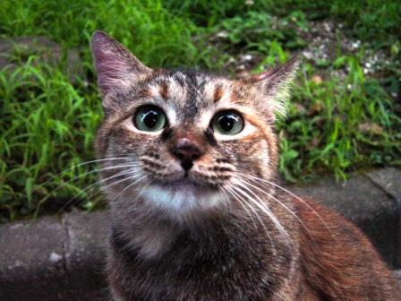 公団の猫にっこり