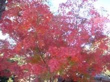 紅葉がキレイです。