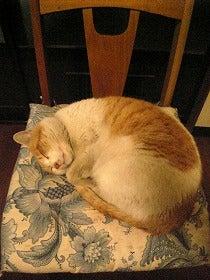 懐かしいな。プリンの寝姿