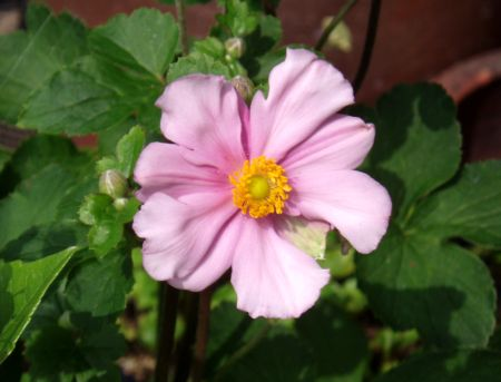 ピンクの花が咲きました