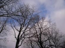 コミュニケーションという不思議。-winter yoyogi park 2008