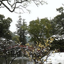 梅が咲いていました♪