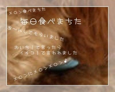 """トイプー""""はな""""のオハナ日記"""