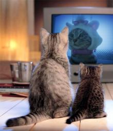 スス♀+ぶー♂ログ ~黒猫とアメショMIX+その下僕~ -テレビにぶーにゃん
