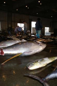 沖縄から遊漁船「アユナ丸」-釣果(20.2.11)