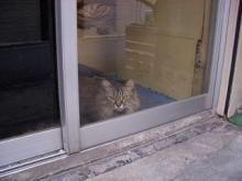 クリーニング店猫-1