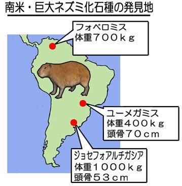 南米の巨大ネズミ化石発見地