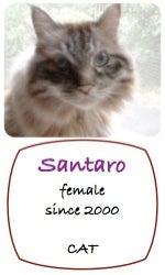 Santaro_p