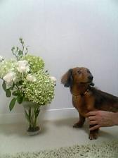 ラックと花