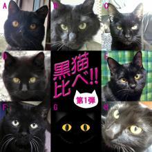 黒猫比べ・第1弾 !!