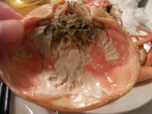 カルマンギアのある生活-セイコ蟹の甲羅