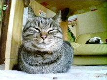 猫に仁義 怪獣に小判-090124_1423~01.jpg