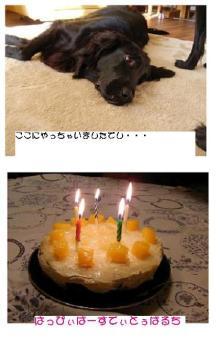 ばるちの誕生日