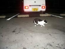 野良猫ブッチーニ