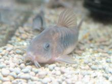 そこはかとなく熱帯魚-赤之