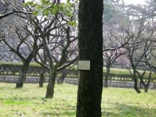 木々たち1
