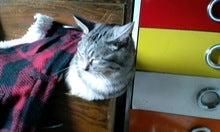 スス♀+ぶー♂ログ ~黒猫とアメショMIX+その下僕~ -CA3C00570001.jpg