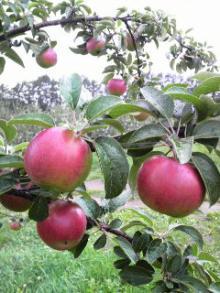 北上りんごです~