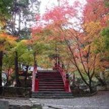 今高野山の紅葉
