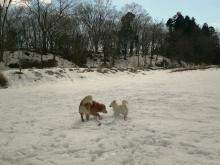 遊んでると風が強くなって チト寒かった^^;