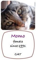 Momo_p