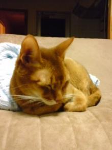 たかが猫 されど猫-アンジ君、死地を彷徨ったよ・・