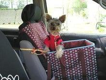 zuzu in car
