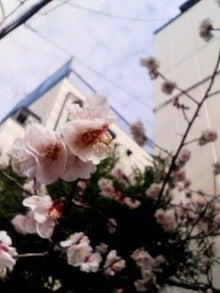太陽族花男のオフィシャルブログ「太陽族★花男のはなたれ日記」powered byアメブロ-090228_1349~002.jpg