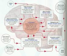Krichmar brain model