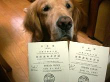 夏に夫婦して『国際免許』を貰ってきてあります♪♪