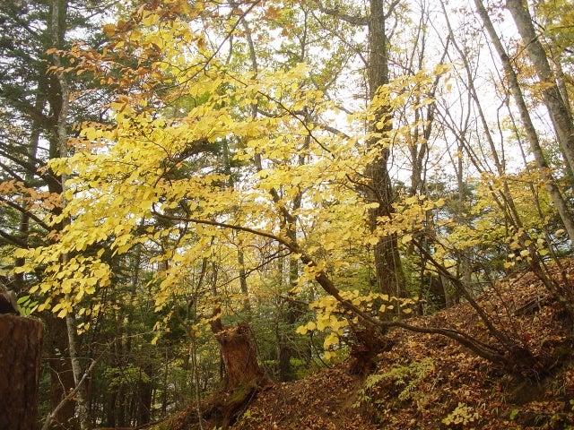 登山道紅葉1