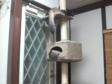 おやぢと風鈴の猫日記-2008122919330000.jpg