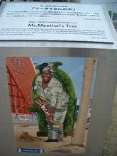 マータイさんの木