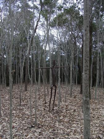 cinnamon log-kam-9