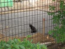 '05夏・仙台の猫-3