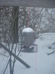 アメリカ~NYの田舎生活-Bird feeder1