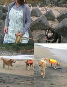 近くの海岸へ みんなでお散歩に行って~~