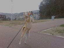 柴犬「なつ」 写真館 動画館-画像-0087.jpg